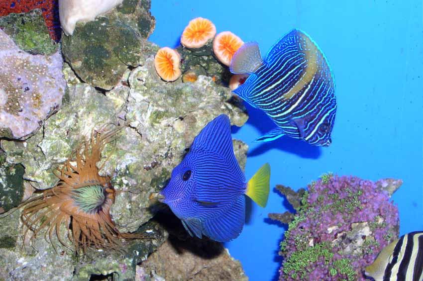 壁纸 海底 海底世界 海洋馆 水族馆 850_565
